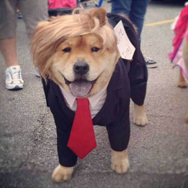 dogs-halloween-costumes-42