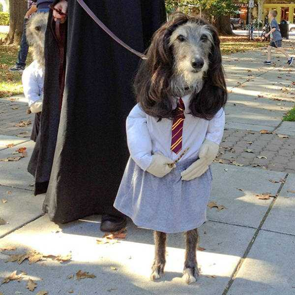 dogs-halloween-costumes-43