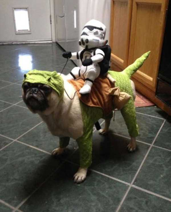dogs-halloween-costumes-44