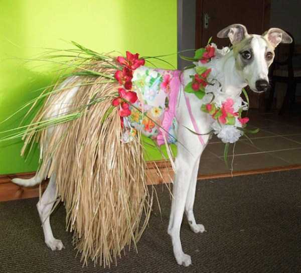 dogs-halloween-costumes-45