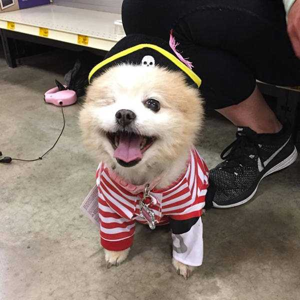 dogs-halloween-costumes-46