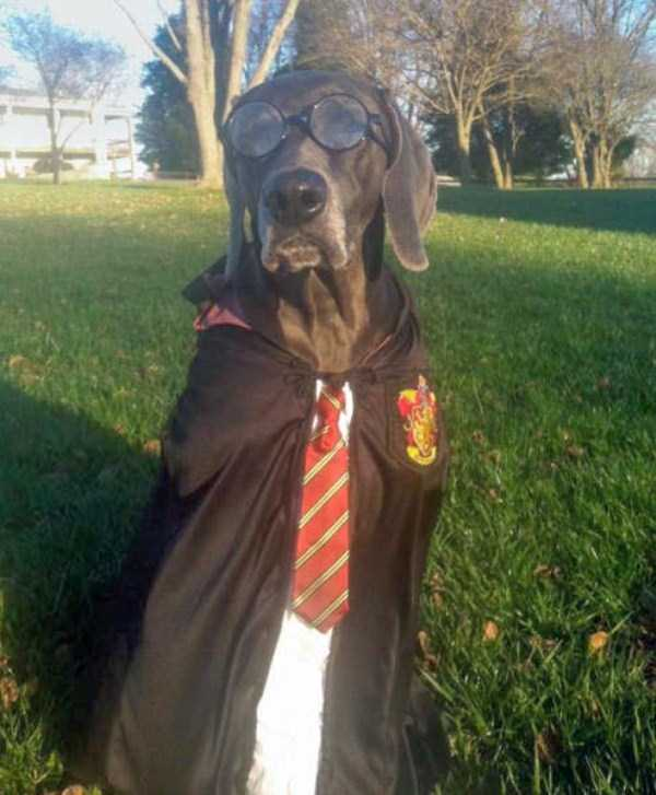 dogs-halloween-costumes-48