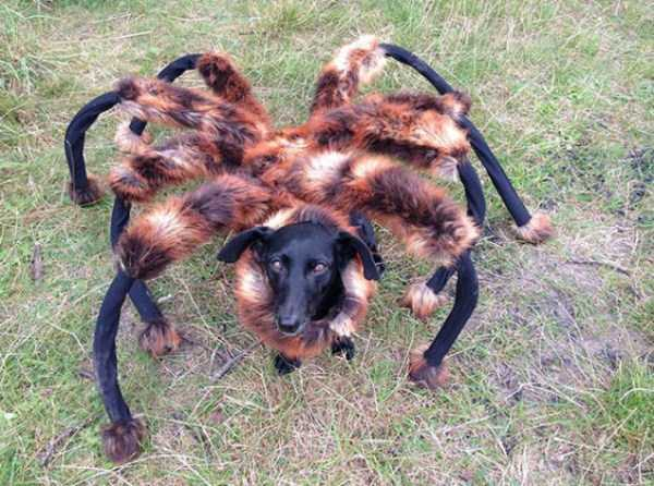 dogs-halloween-costumes-5