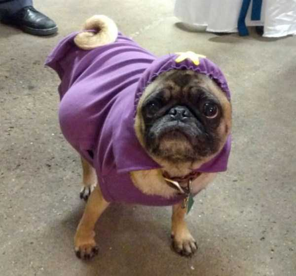 dogs-halloween-costumes-50