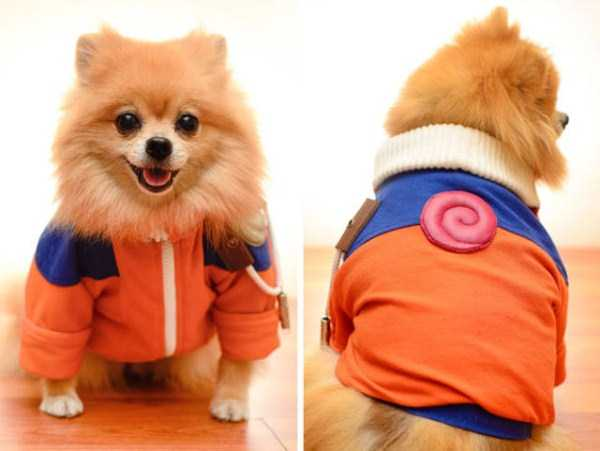 dogs-halloween-costumes-51