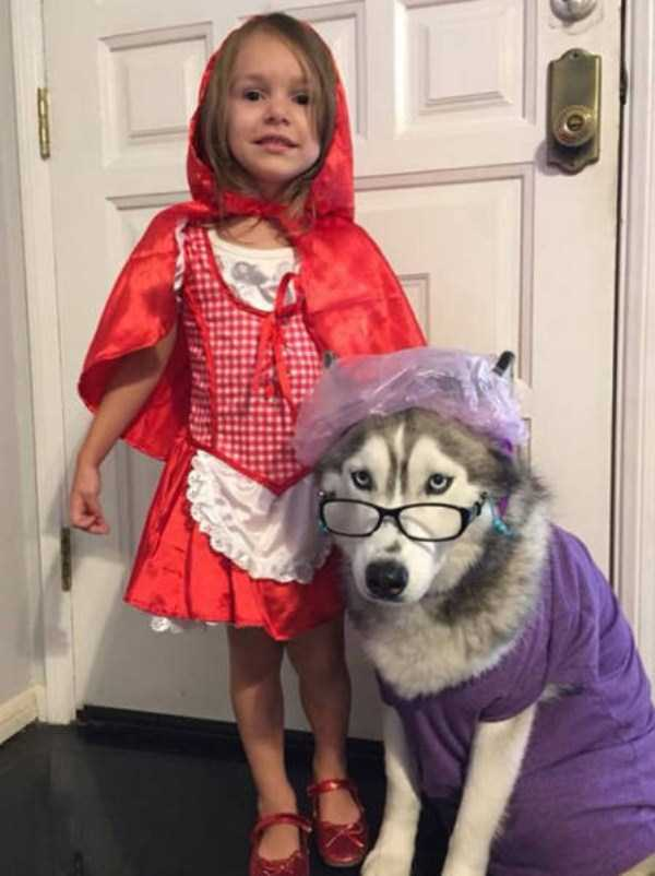dogs-halloween-costumes-53