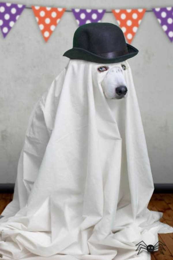 dogs-halloween-costumes-54