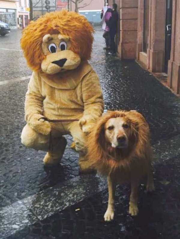 dogs-halloween-costumes-55
