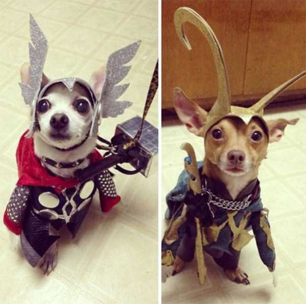 dogs-halloween-costumes-56
