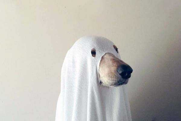 dogs-halloween-costumes-6
