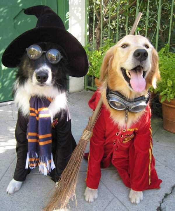 dogs-halloween-costumes-8