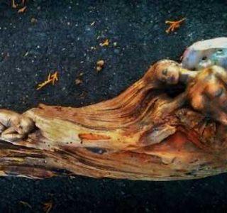 Hauntingly Beautiful Driftwood Sculptures By Debra Bernier (30 photos)
