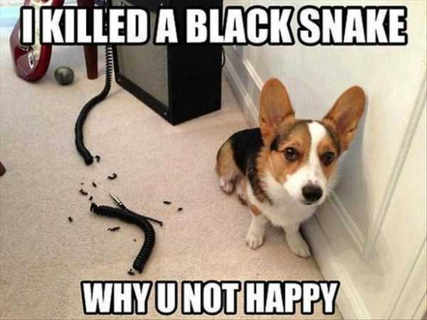 funny-dogs-photos-1