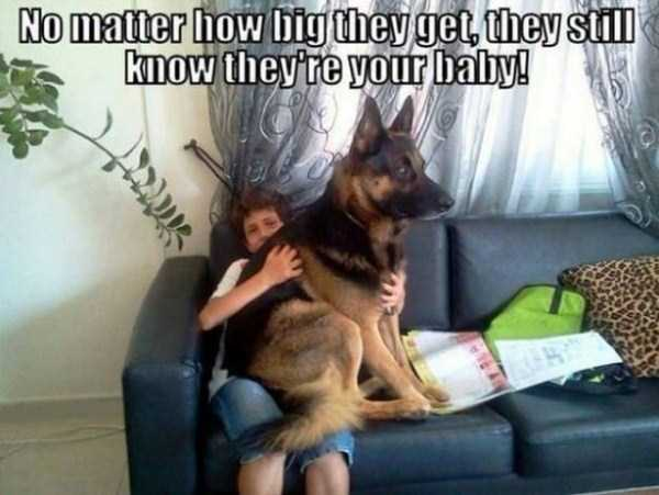 funny-dogs-photos-10