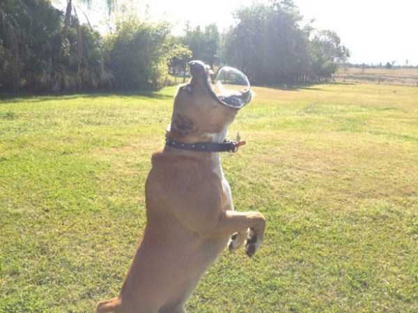 funny-dogs-photos-12