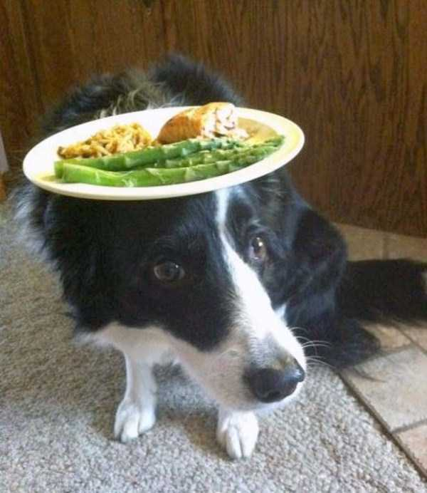 funny-dogs-photos-15