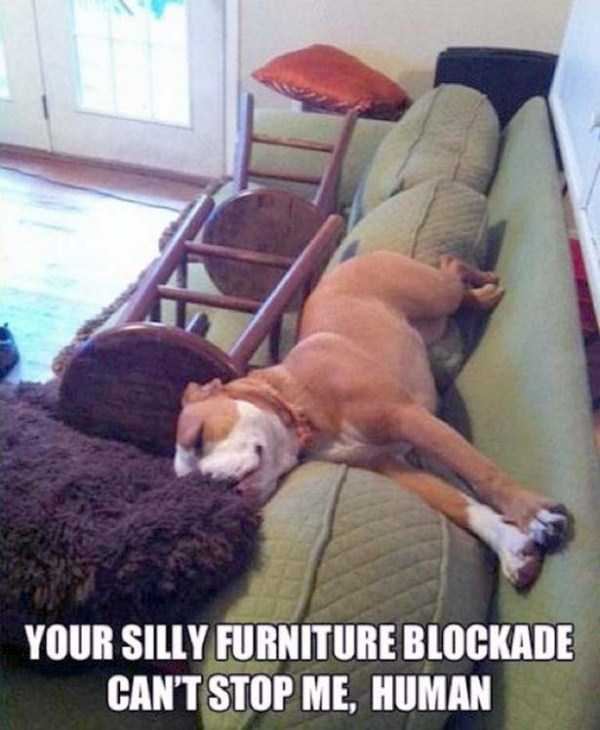funny-dogs-photos-3