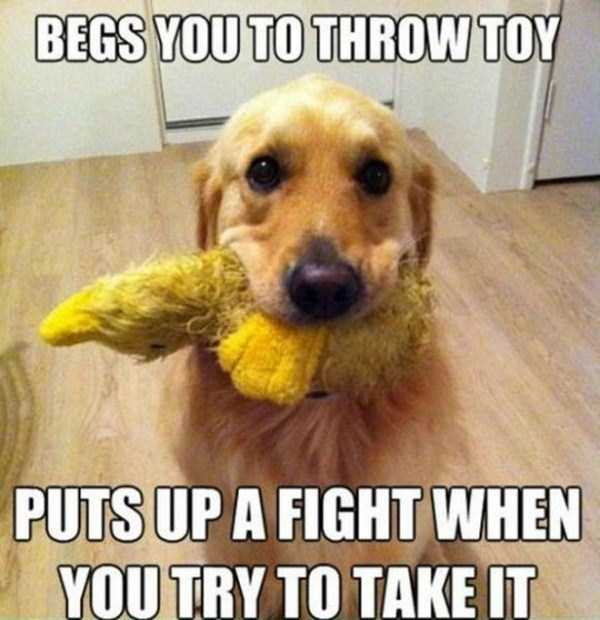 funny-dogs-photos-7