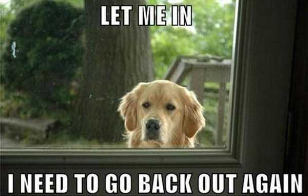 funny-dogs-photos-8