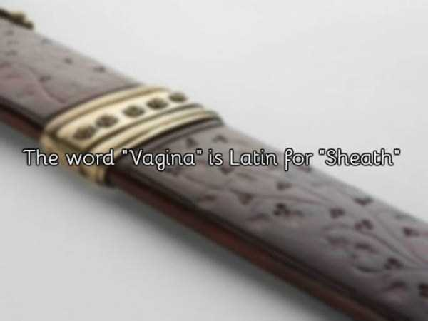 interesting-facts-about-vagina-1