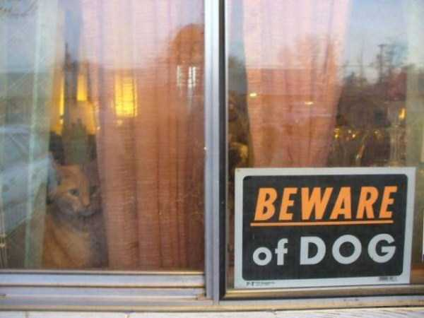 totally-harmless-guard-dogs-10