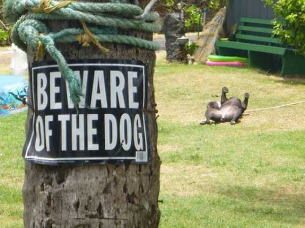 totally-harmless-guard-dogs-18