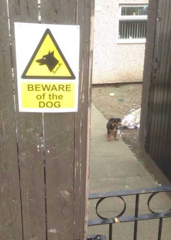 totally-harmless-guard-dogs-19