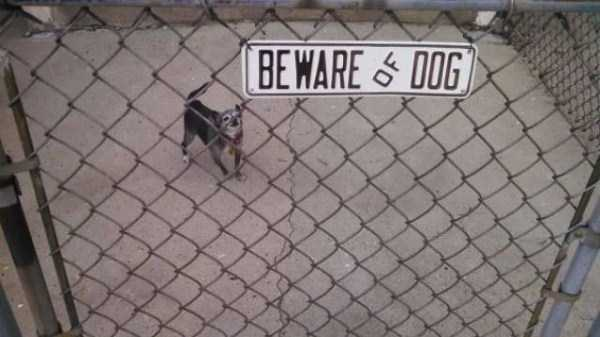 totally-harmless-guard-dogs-2