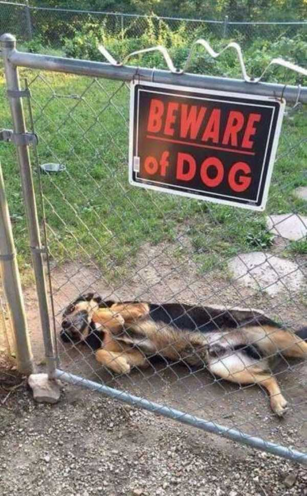 totally-harmless-guard-dogs-20