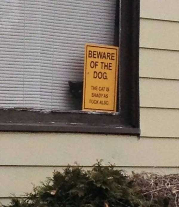 totally-harmless-guard-dogs-21