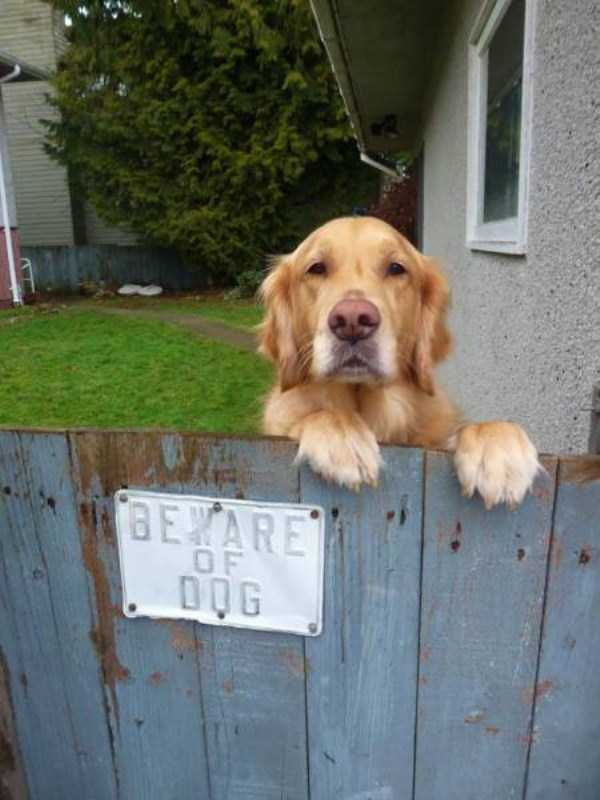 totally-harmless-guard-dogs-22