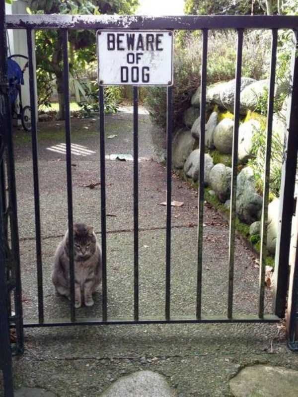totally-harmless-guard-dogs-26
