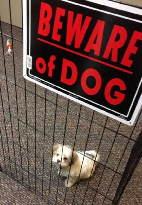 totally-harmless-guard-dogs-27