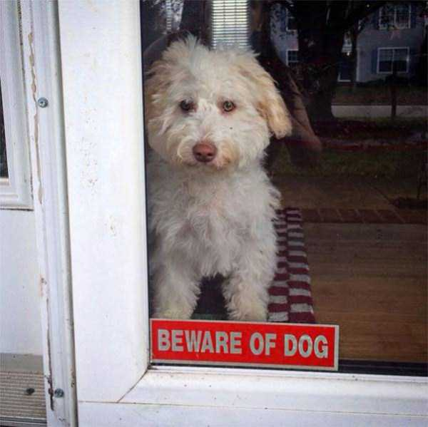 totally-harmless-guard-dogs-31