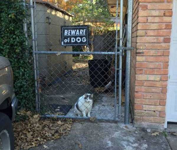 totally-harmless-guard-dogs-34