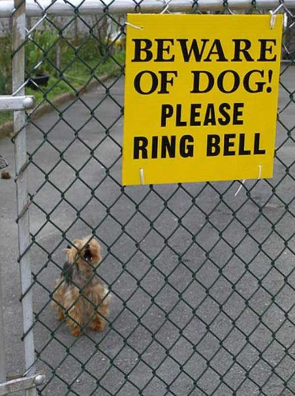 totally-harmless-guard-dogs-35