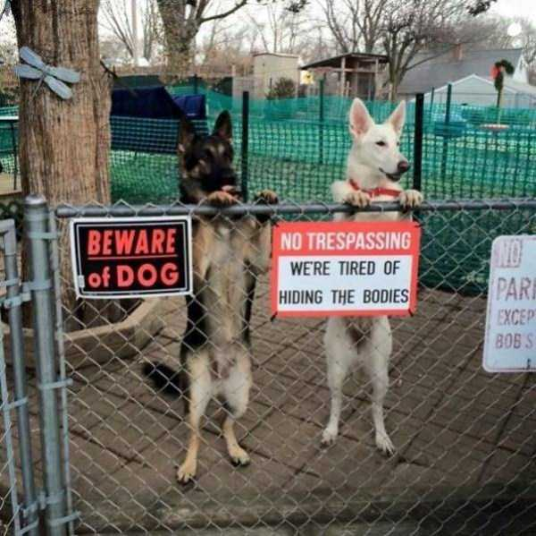 totally-harmless-guard-dogs-39