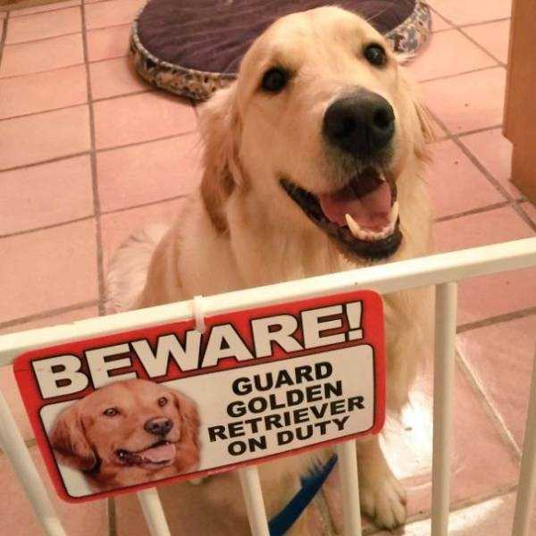 totally-harmless-guard-dogs-5