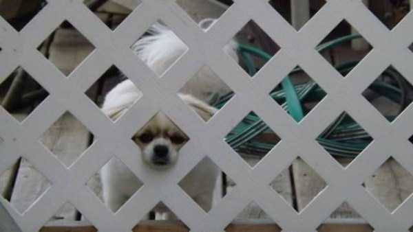 totally-harmless-guard-dogs-9