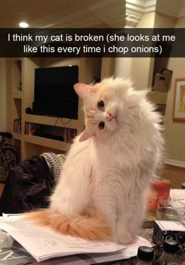 funny-cat-snapchats-1