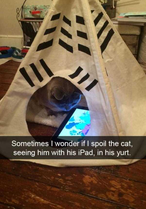 funny-cat-snapchats-10