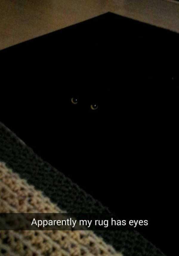 funny-cat-snapchats-11