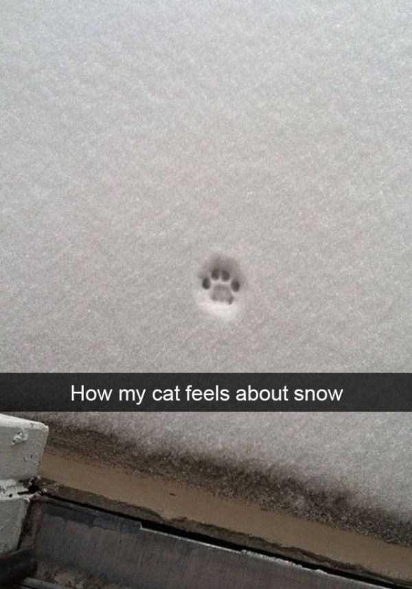 funny-cat-snapchats-12