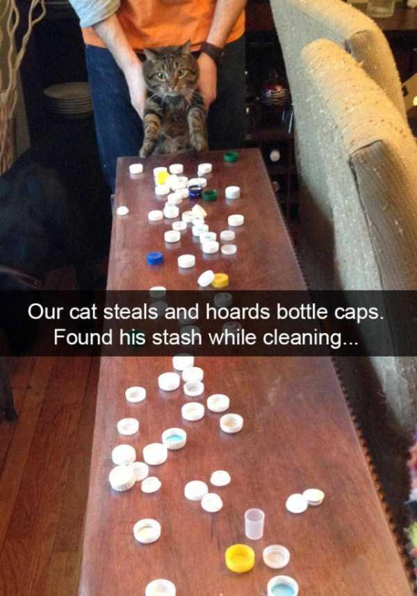 funny-cat-snapchats-13