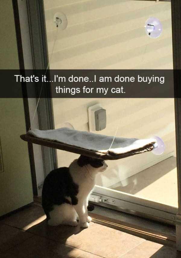 funny-cat-snapchats-14