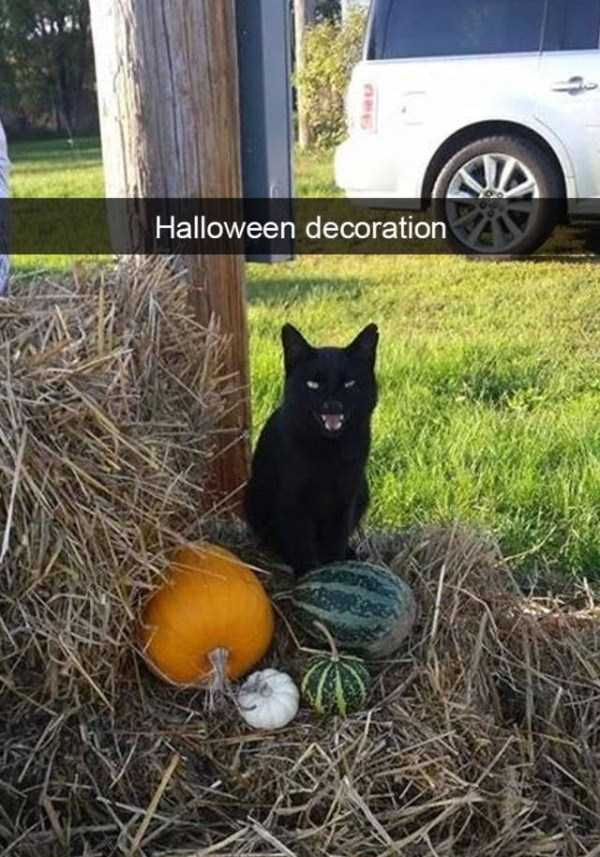 funny-cat-snapchats-15