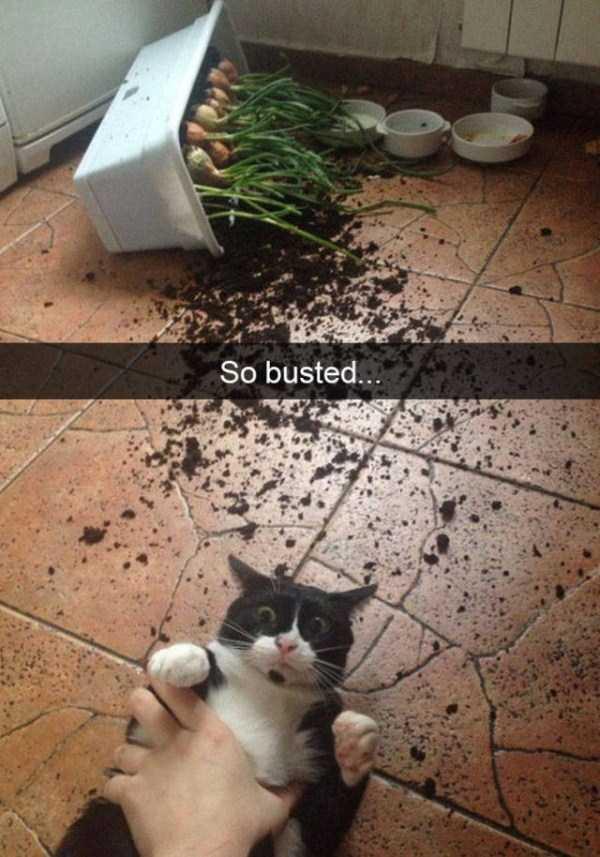 funny-cat-snapchats-16