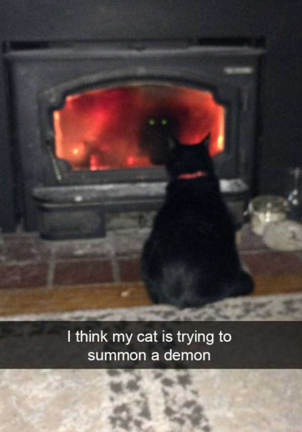 funny-cat-snapchats-17