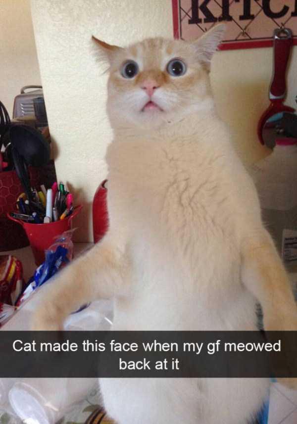 funny-cat-snapchats-19
