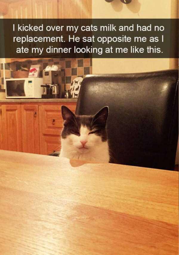 funny-cat-snapchats-2